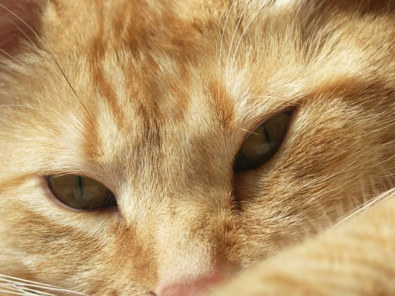 winnie eyes