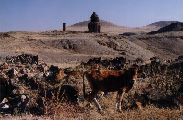 A cow stands in a field with ruins in the distance